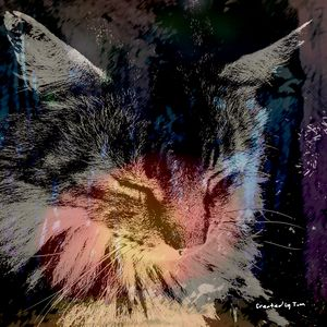 The Cat - Created by Tom