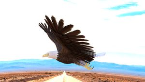 Eagle Over A Lonely Road