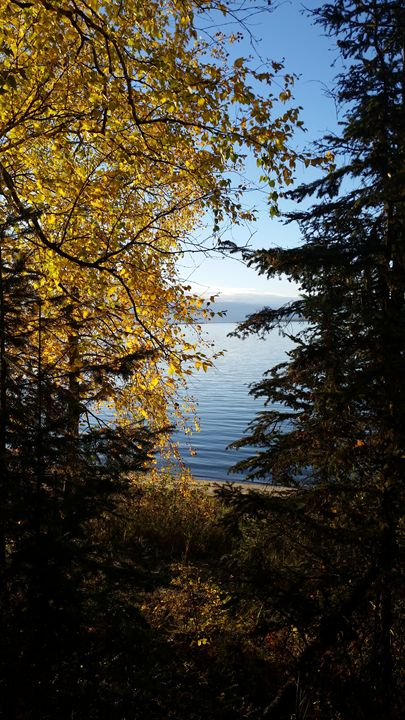 Lakeside with birch and spruce trees - Duckworth photography