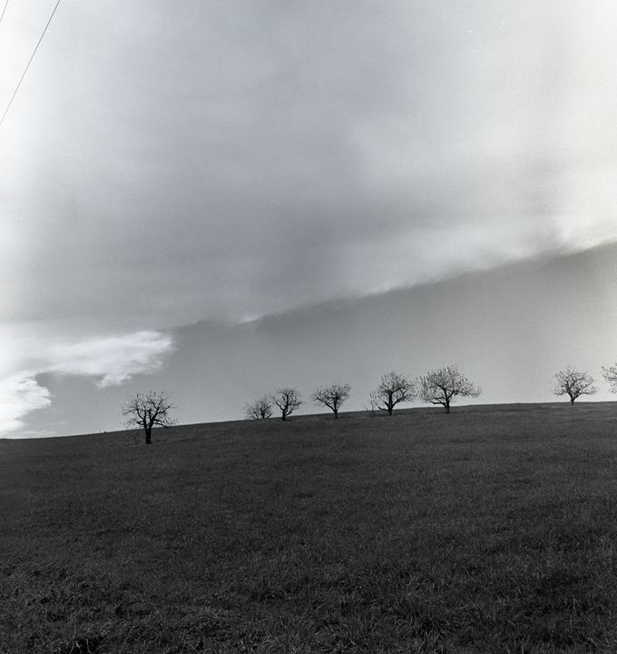 Pastoral Horizon - Lucia Rollow Photography