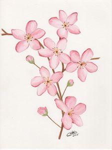 Soft Pink Flowers - CD Art