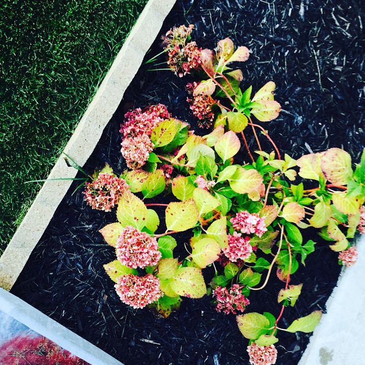 Plush Blossom - Nani