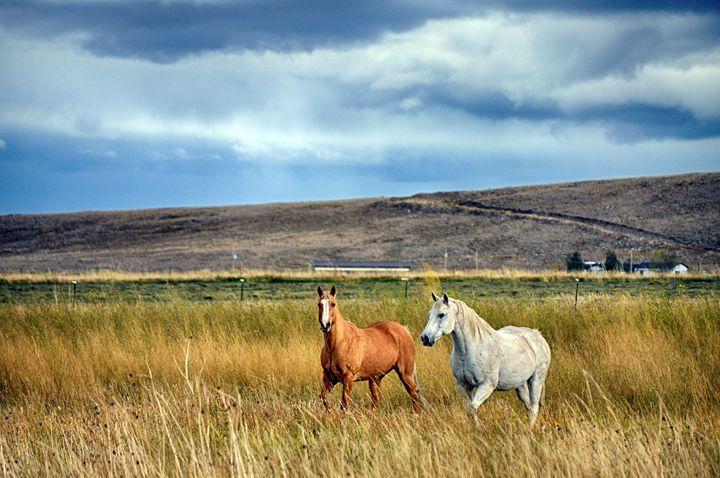 Horses In Field - John McEvoy Photographer