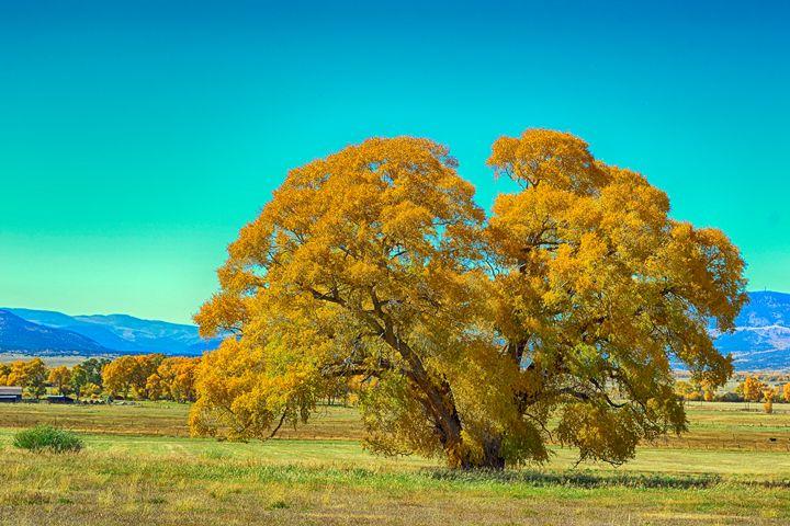 Pinos Creek valley, near Del Norte - John McEvoy Photographer