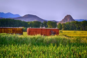 Rio Grande box cars, cattails,