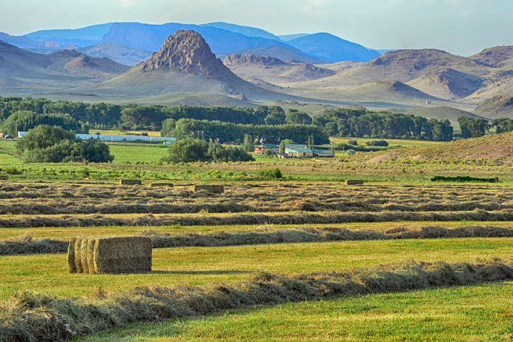 Del Norte hay field patterns - John McEvoy Photographer