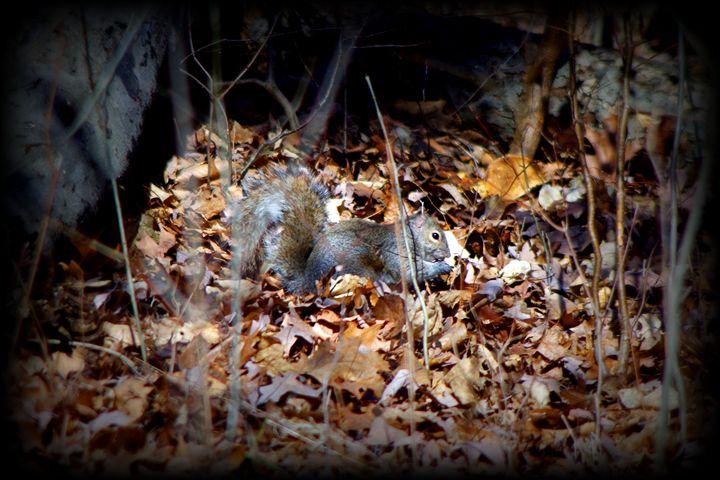 Squirrel - Stephanie Shank