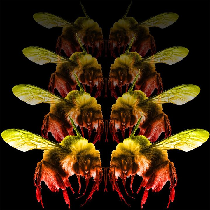 Bumblebee Rumbles - The Artistic Experience