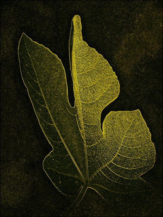 Fig Leaf Portrait - Rybird