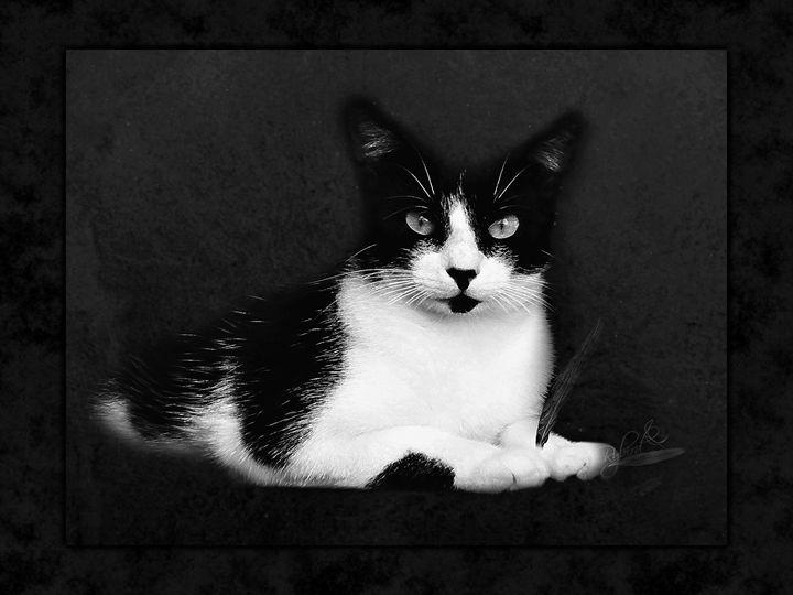 Tuxedo Cat - Rybird
