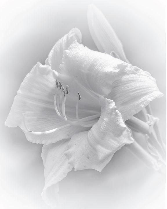 Albis Die Lilium - Rybird