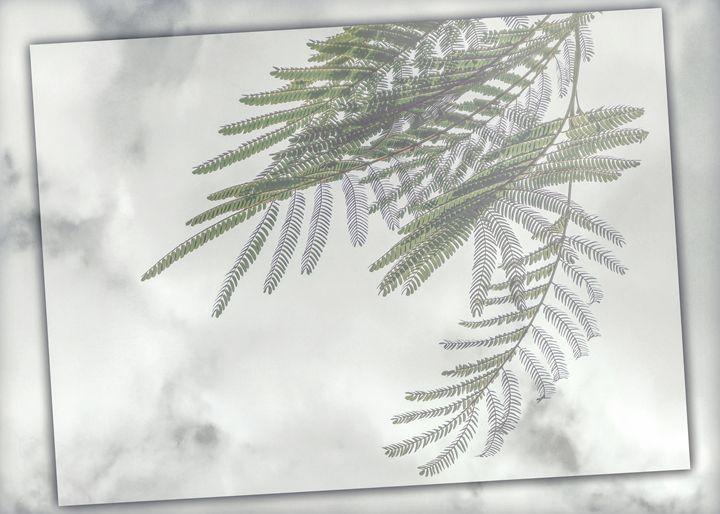 Wind Tamer - Rybird