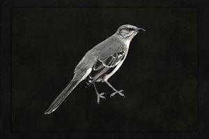 Pondering Bird - Rybird