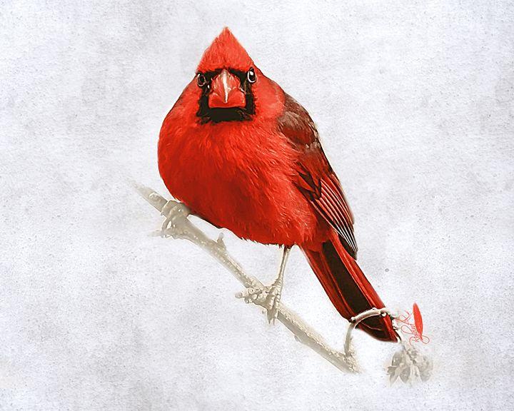 That Cardinal Look - Rybird