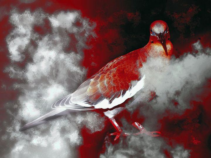 Desperate  Decaocto - Rybird