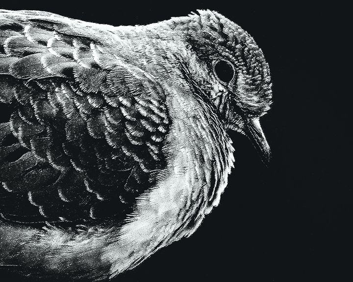 BW Dovey Fat Bird - Rybird
