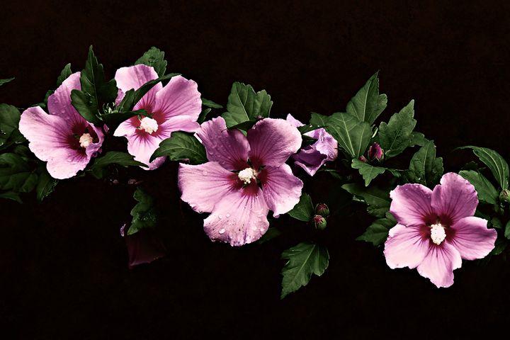 The Flower Line Up - Rybird