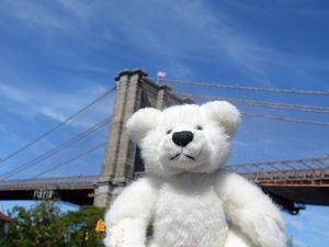 Teddy by the Brooklyn Bridge