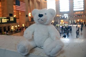 Teddy at Grand Central Station 2