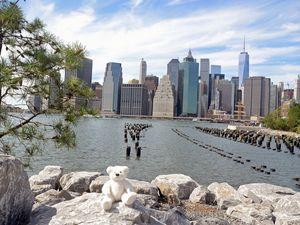 Teddy at Brooklyn Bridge Park 2