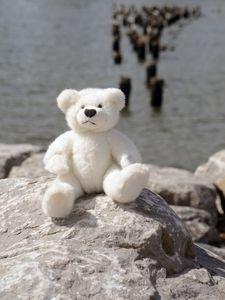 Teddy at Brooklyn Bridge Park