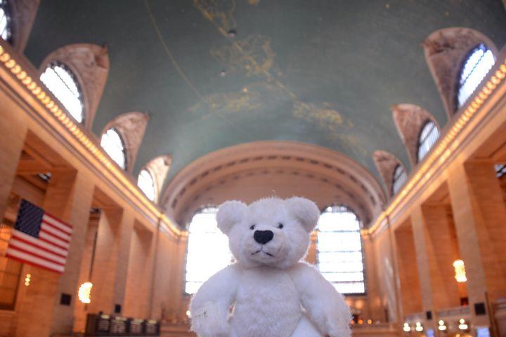 Teddy at Grand Central Station - Bianca Nedjée Photography