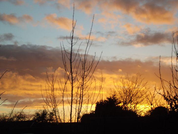 Garden Sunset - Mark Rosser
