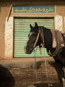 A horse in the heart of Sudan.
