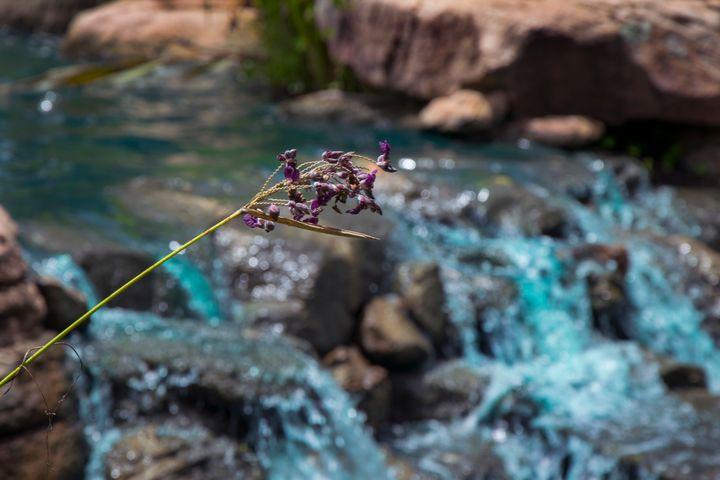 Purple Flowers Over Creek - Happy Little Pixels