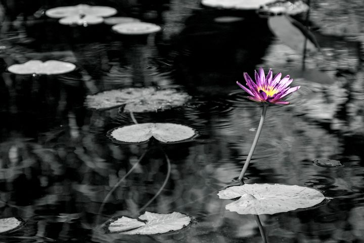 Lonesome Lily (Black and White) - Happy Little Pixels