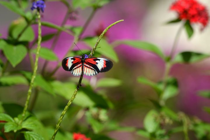 Butterfly On Stem - Happy Little Pixels