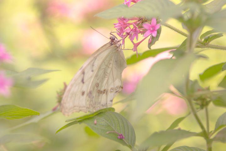 Dreamy Butterfly - Happy Little Pixels