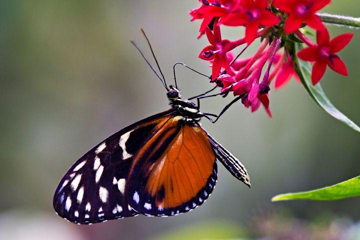 Hungry Butterfly - Happy Little Pixels