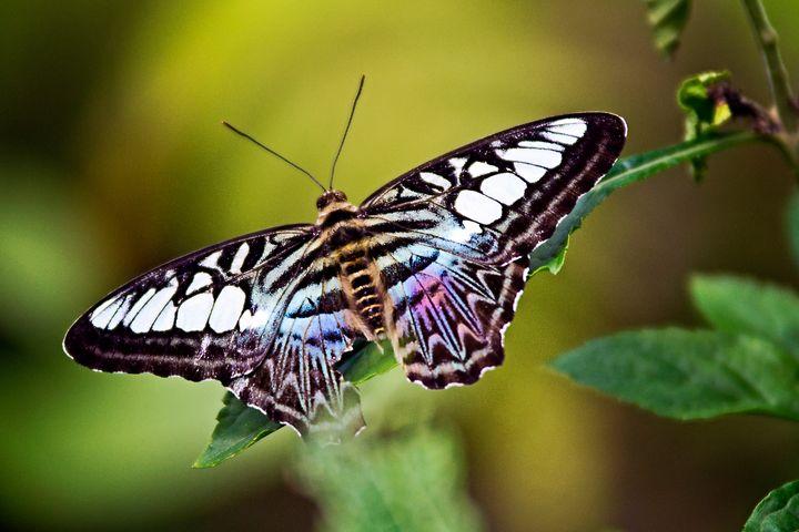 Rainbow Butterfly - Happy Little Pixels