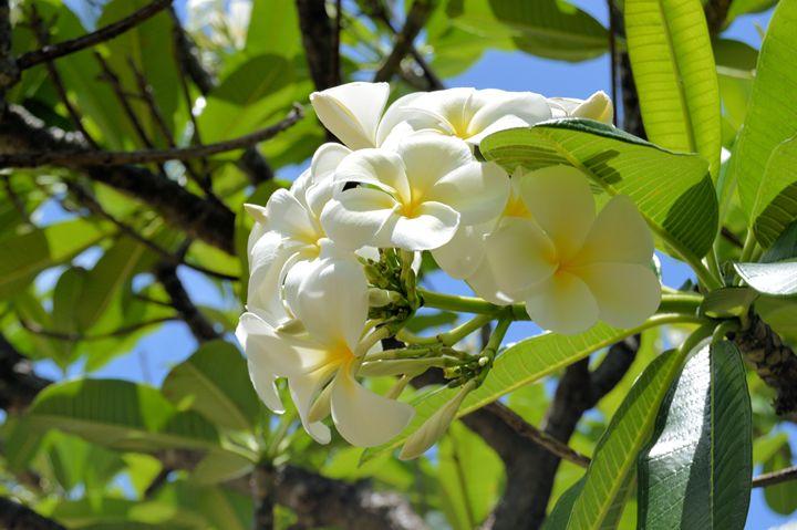 Sunny flowers - Jenny Davis Photography
