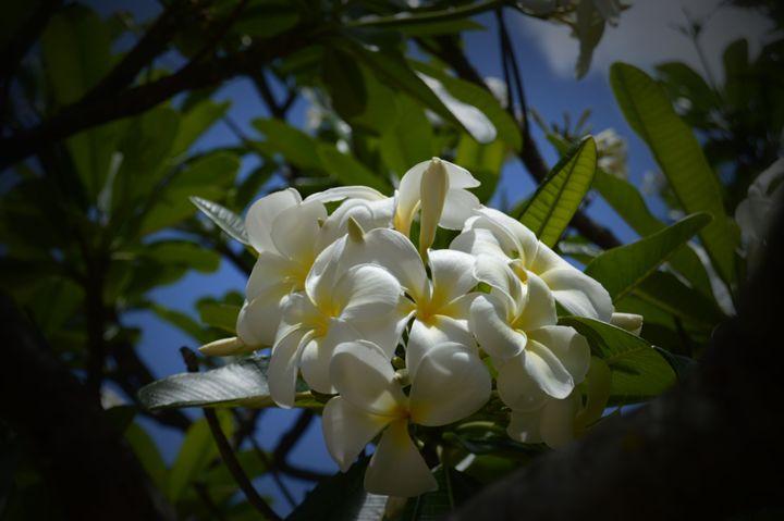 White Flowers - Jenny Davis Photography