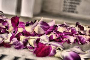 Lei to Rest