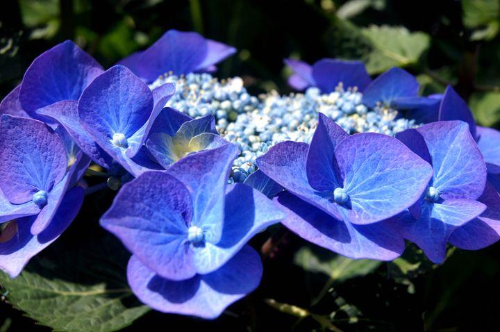 Nice blue flowers - najih7