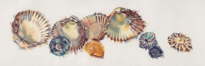 Shell collection - Sue Hole Creative