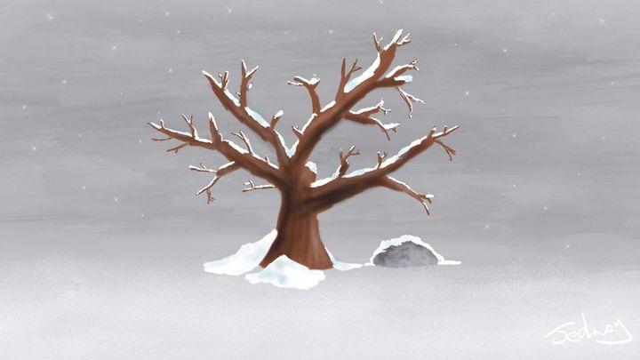 Snow tipped tree - Josh Edney
