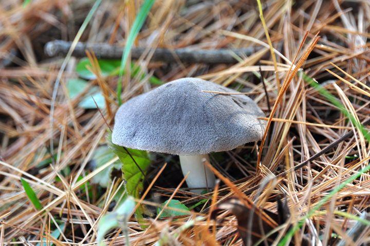 Wild Mushroom - Black River Images
