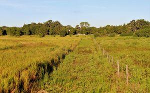 Farm Grove