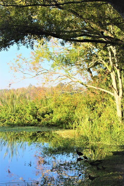 Lake meeting - Thomas Wildone Art/Photography