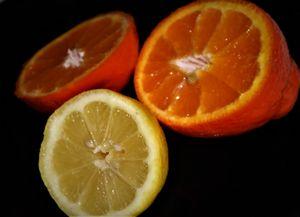 Midnight Citrus