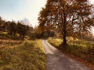 Irish Country Lane
