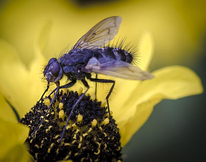 Fly - Christopher Warren Sr.