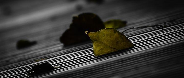 Leaf - Christopher Warren Sr.
