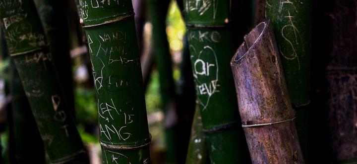 Bamboo - Christopher Warren Sr.