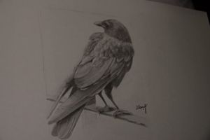 Crow No 2 / Original