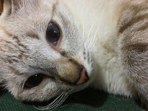 Cat (Photo)
